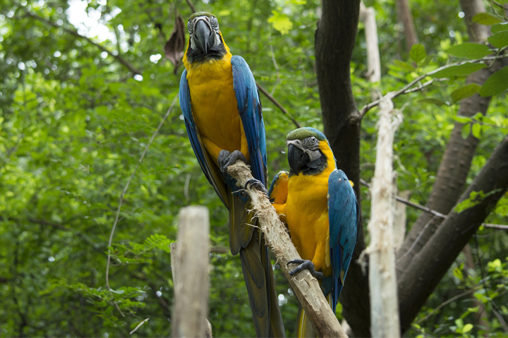 AMAZON RAINFOREST - BIRDING, South America