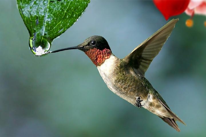 BIRDING - ECUADOR, South America