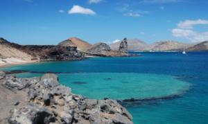 GALAPAGOS, wildlife, Galapagos, Ecuador, South America