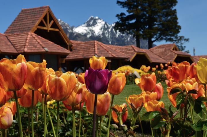 Tulipanes-Bariloche, Llao Llao, Patagonia ,Argentina, South America