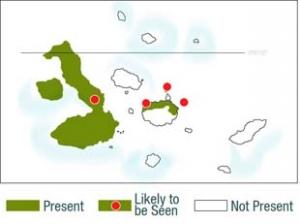 Find Land Iguana