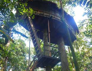 treehouse-lodge-colombia