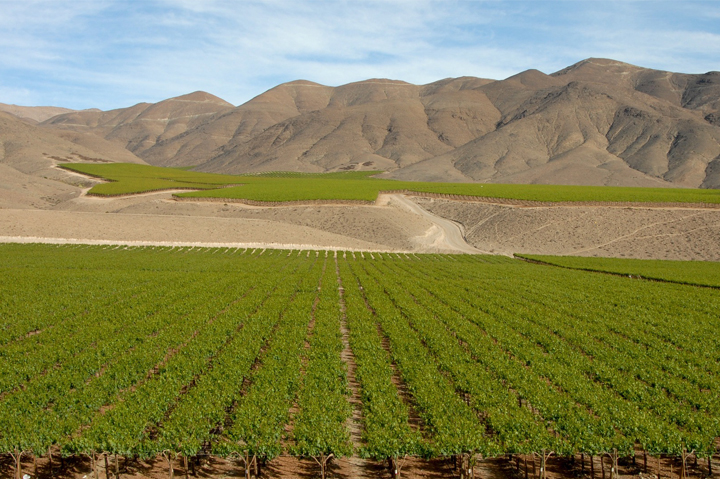 CHILEAN VINEYARDS,Chile, South America