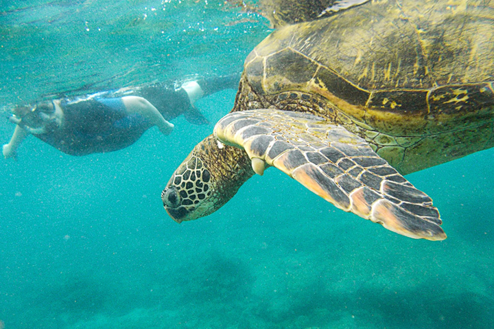 SNORKEL - Galapagos, Ecuador, South America